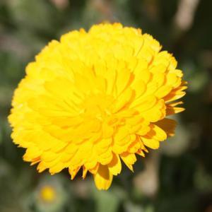 田島川バス停通りの花壇では、マリーゴールド・なでしこ・マーガレレットがコラボして、穀雨の薫りを醸し出している