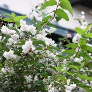 長崎県道136号線・法川通りの民家では、さつき・サルスベリ・チロリアンランプがコラボして、向暑の薫りを醸し出している。 の写真にBGMをインサートし、動画にしました。  動画