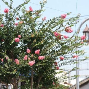 島原鉄道・東小路通りには、サルスベリが花開き、夏空の薫りを醸し出している。 の写真に、BGMをインサートし、動画にしました。  動画