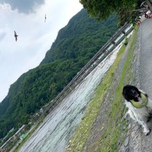 頑張って!嵐山!!!(願)