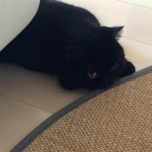 黒猫あるある