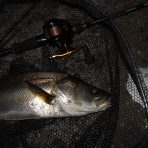ROXANI POWERSHOOTERで楽しんでみる(北港周辺シーバス釣行)。