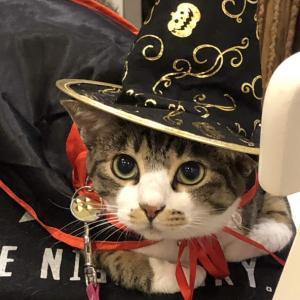 本日の美人猫。。。バサラ嬢