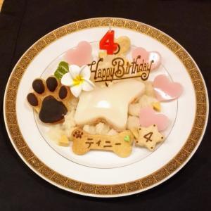 犬用ケーキ ★星型 (S・M)