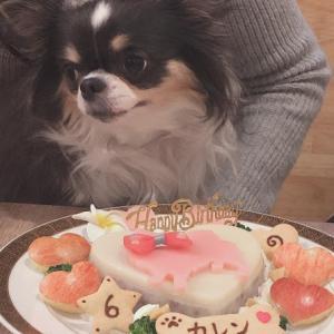 チワワ『カレンちゃん』のBirthdayケーキ