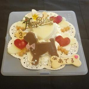 トイプードル『あでるちゃん』のBirthdayケーキ