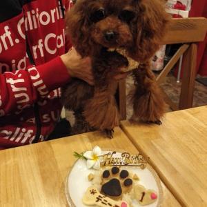 トイプードル「デニーモちゃん」のBirthdayケーキ