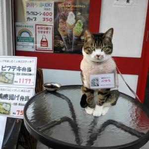 バサラ嬢、看板猫大賞にエントリーしました!