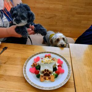 ワアイヤーダックス『福くん』&Mix犬「姫ちゃん」のBirthdayケーキ