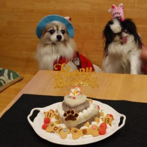 狆「葵ちゃん」&パピヨン「ロイくん」のBirthdayケーキ