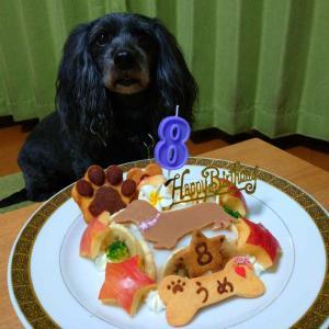 Mix犬「うめちゃん」のBirthdayケーキ
