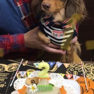 ミニチュアダックスフンド「りおんくん」のBirthdayケーキ