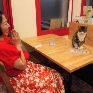 看板猫バサラ、タロットに挑戦!