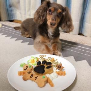 カニンヘンダックスフンド「カイくん」のBirthdayケーキ
