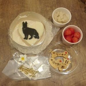 シェパード「リッターくん」のBirthdayケーキ