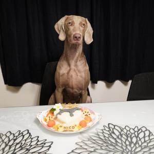 ワイマラナー「NICOちゃん」のBirthdayケーキ