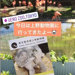 おべんと持って、動物園に行ってきた♡