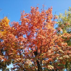 音楽の秋♪