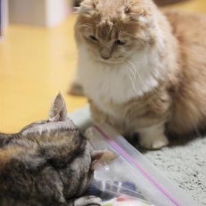 仕返し猫パンチ。