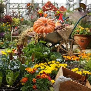 Halloween Season ❤️ FANCL GINZA SQUARE