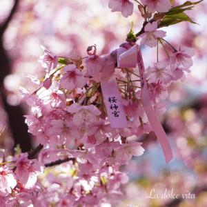SAKURA SEASON ❤️ 桜神宮