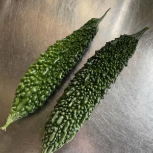 グリーンカーテン拡張中、二本収穫