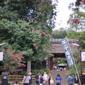 2つの「じんだい」散歩(神代植物公園&深大寺)その2