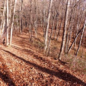 晩秋の多摩川源流の山歩き