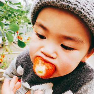 幸せ味の飯能いちご!