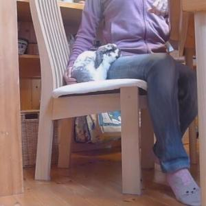 椅子の上の甘えん坊