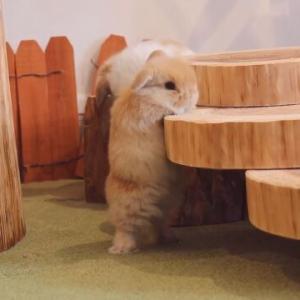 一緒に上に登りたい!