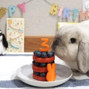うさぎさんと誕生日ケーキ