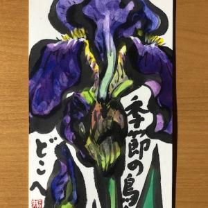ジャーマンアイリスの花