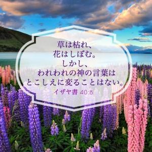 「明日は日曜日*\(^o^)/* 是非、教会へ!」 amba.to/1puc22X
