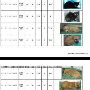 岩国保健所 収容犬猫情報