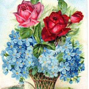 薔薇シリーズのポストカード 忘れな草も・・
