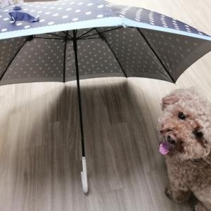 大阪 犬 幼稚園 【傘に慣れておこう!】