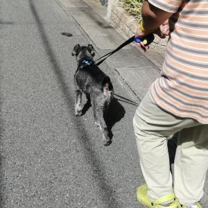 川西 池田 犬しつけ 「お散歩で吠える!のご相談」