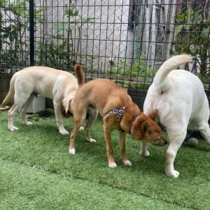 豊能 川西 犬の幼稚園 「ハウス、クレートが苦手な子には...」