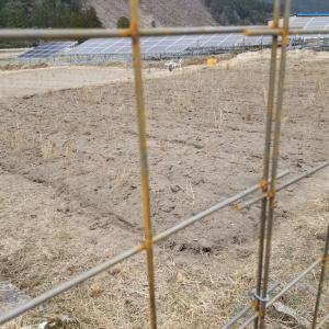 2月10日、20aの畑への株植完了、2124本植えました。