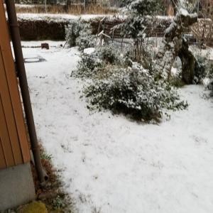 12日朝、雪が降りました。10日、集落の防護柵づくりでした。