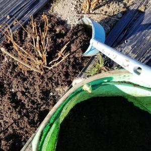 18,19,20,21日と、株の根元にバーク堆肥を入れ、また、2月からの株植の畝立てを、やりました。