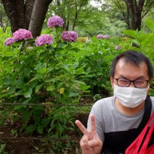 紫陽花を見に公園へ
