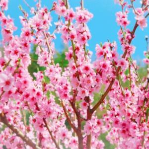 春はデトックスの好機です! 新陳代謝が活発になり、パワーアップします。