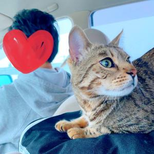 猫と一緒に、宇都宮から札幌まで、車と新幹線で長距離移動DAYでした。