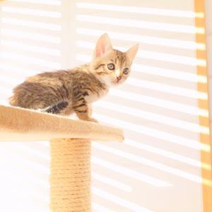 猫と一緒に暮らしつつ壁紙をキレイにキープするコツ