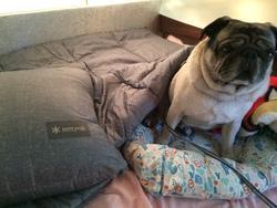 20年ぶりに買い直した寝袋。