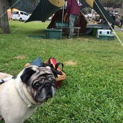 雨の日のキャンプは何をしてるのか?