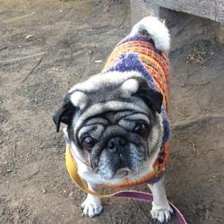 どんちゃんの編み込み模様のセーター