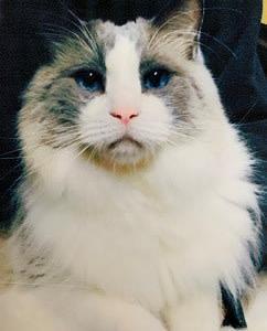 額入り 猫ちゃん(メモリアル)